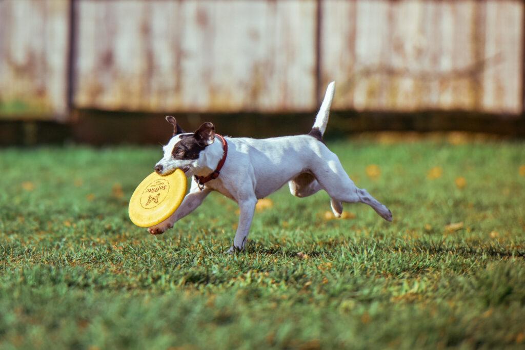weight loss dog playing