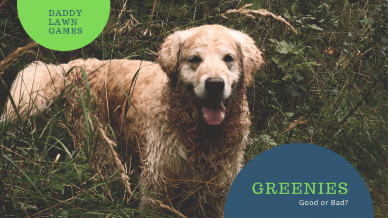 Are greenies bad for dogs?
